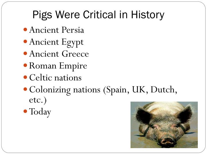 Pigs Were Critical in History