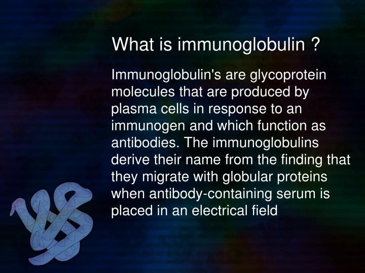 What is immunoglobulin ?