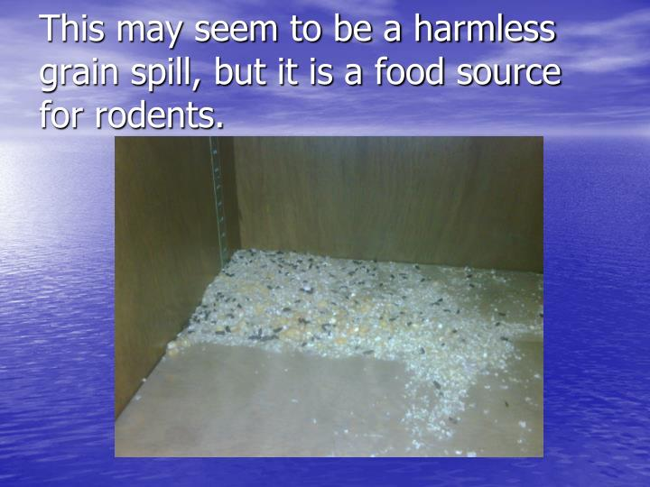 This may seem to be a harmless grain spill, but it is a food source for rodents.
