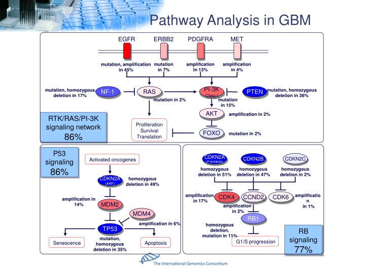 Pathway Analysis in GBM