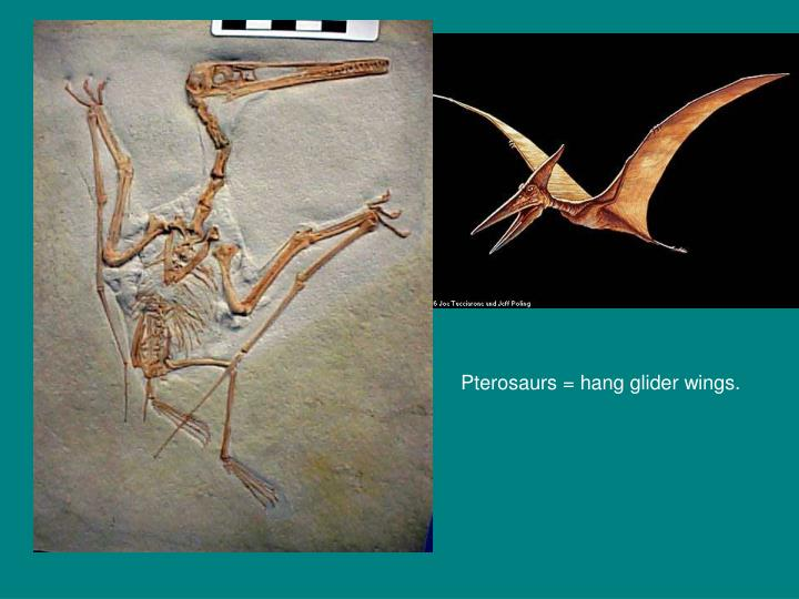 Pterosaurs = hang glider wings.