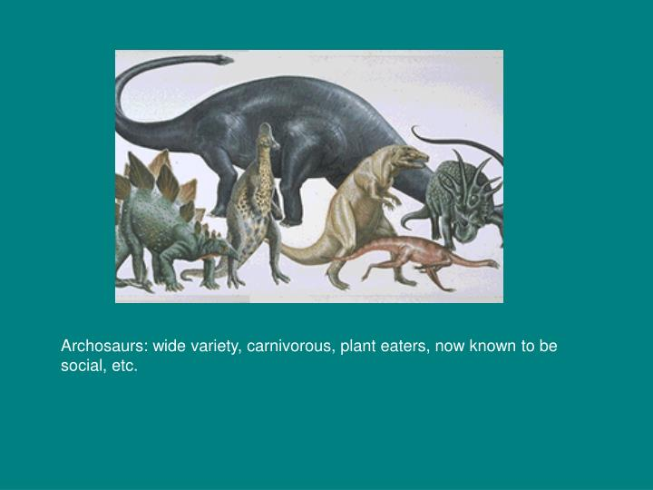 Archosaurs: wide variety, carnivorous, plant eaters, now known to be social, etc.