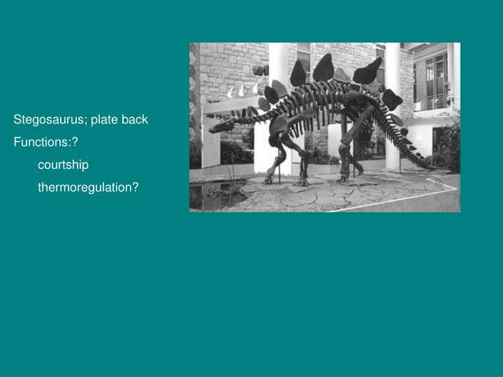 Stegosaurus; plate back