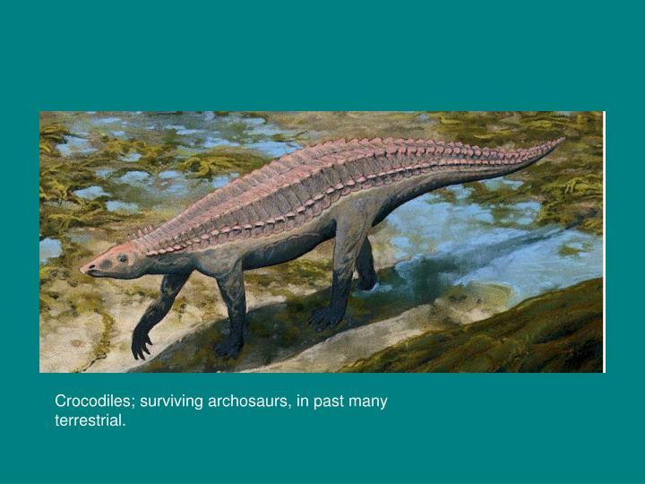 Crocodiles; surviving archosaurs, in past many terrestrial.