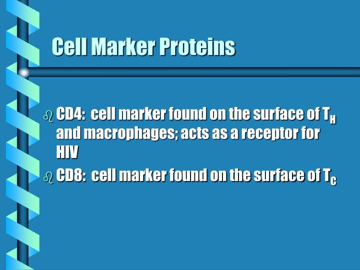 Cell Marker Proteins