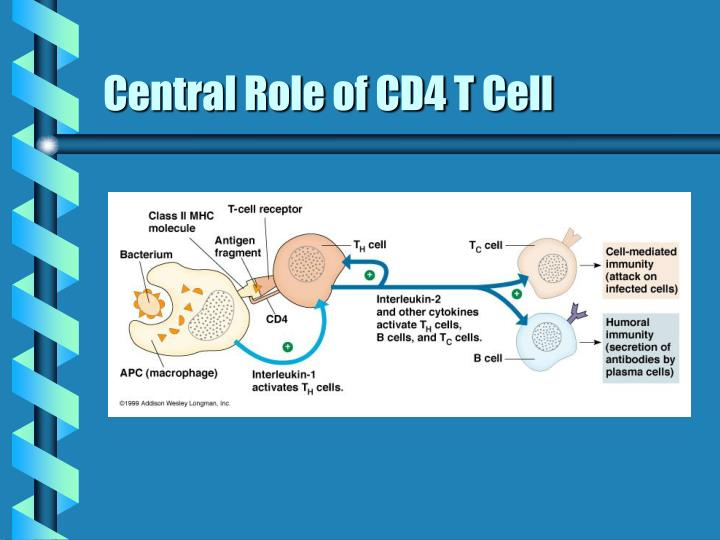 Central Role of CD4 T Cell