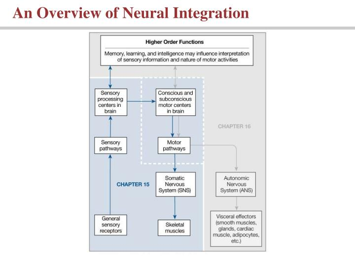 An Overview of Neural Integration