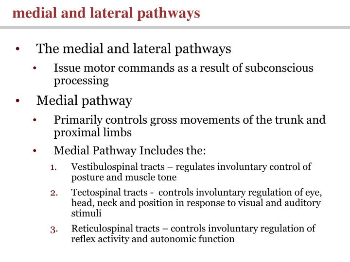 medial and lateral pathways