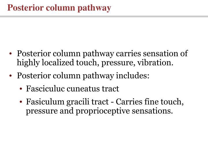 Posterior column pathway