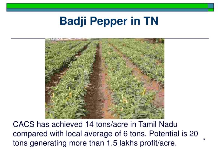 Badji Pepper in TN