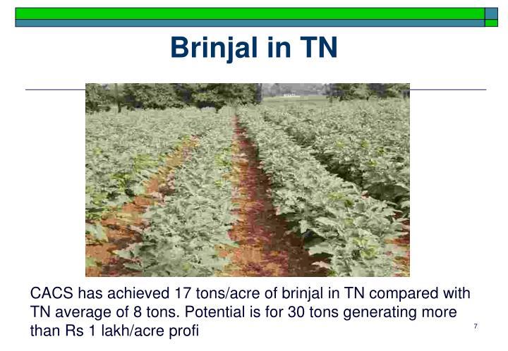 Brinjal in TN