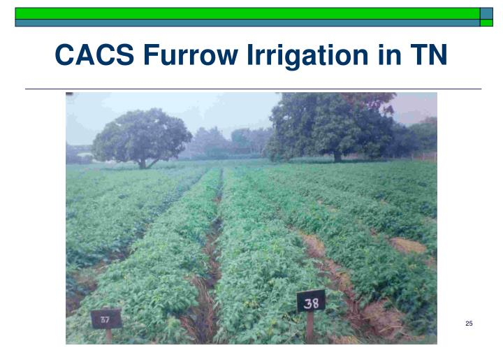 CACS Furrow Irrigation in TN