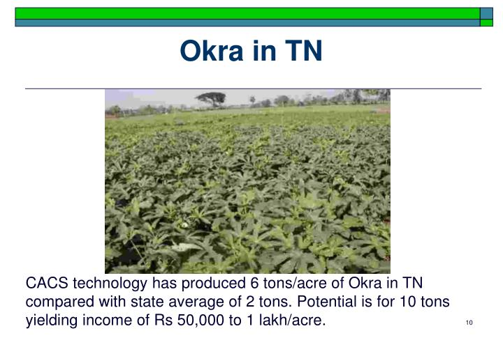 Okra in TN