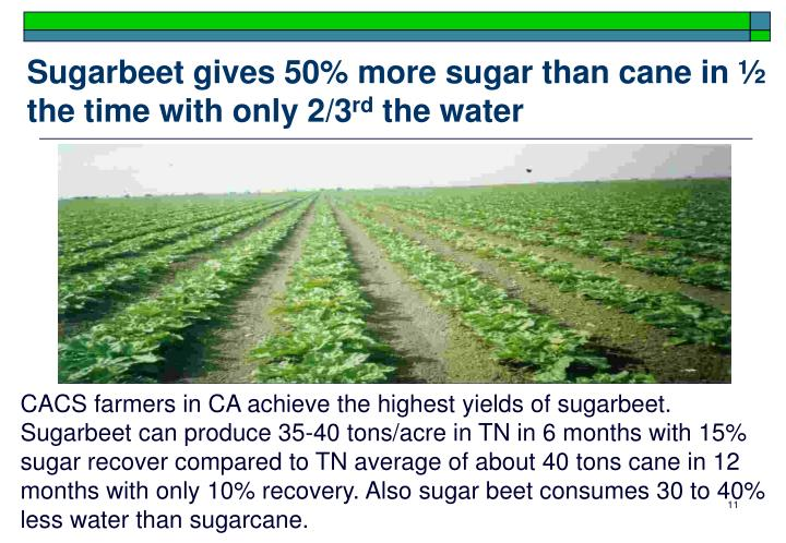 Sugarbeet gives 50% more sugar than cane in ½ the time with only 2/3