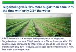 sugarbeet gives 50 more sugar than cane in the time with only 2 3 rd the water