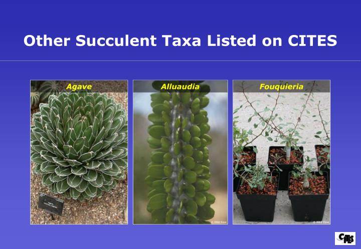 Other Succulent Taxa Listed on CITES