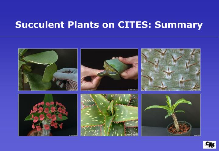 Succulent Plants on CITES: Summary