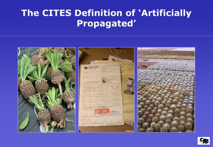 The CITES Definition of 'Artificially Propagated'