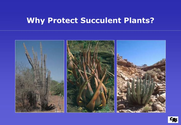 Why Protect Succulent Plants?