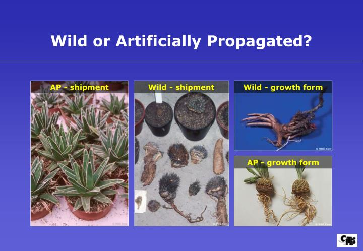 Wild or Artificially Propagated?