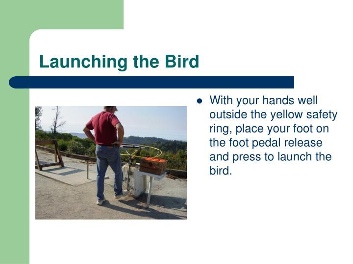 Launching the Bird