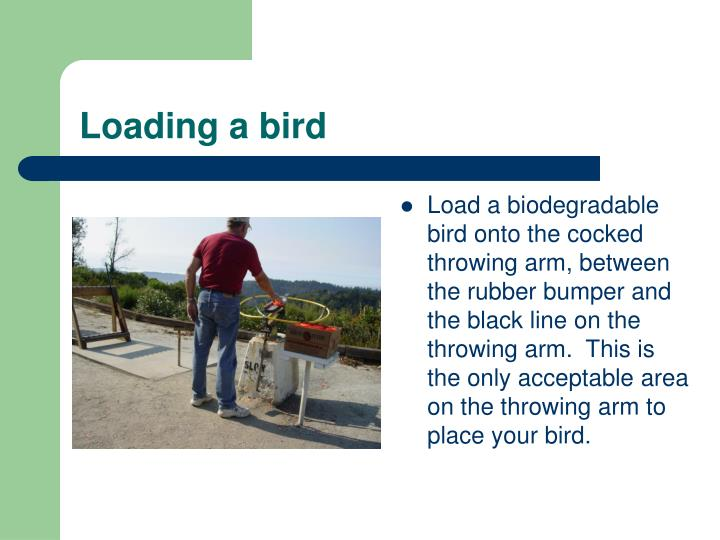 Loading a bird