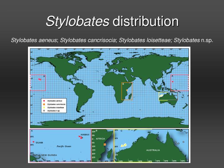 Stylobates