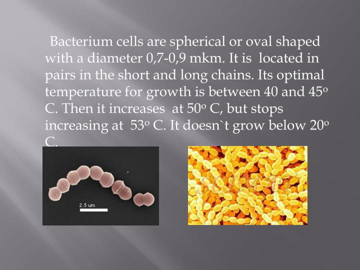 Bacterium cells are spherical or oval shaped with a diameter 0,7-0,9 mkm. It is  located in pairs in the short and long chains. Its optimal temperature for growth is between 40 and 45
