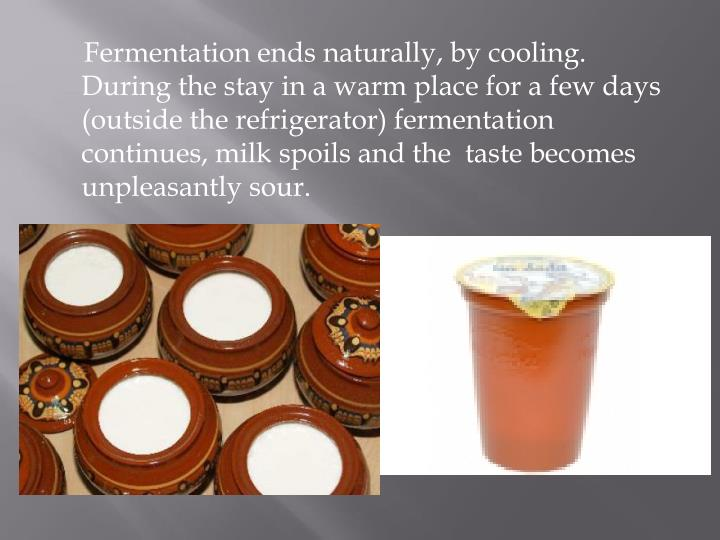 Fermentation ends naturally, by cooling. During the stay in a warm place for a few days  (outside the refrigerator) fermentation continues, milk spoils and the  taste becomes unpleasantly sour.