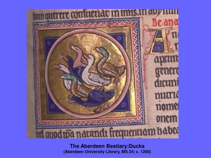 The Aberdeen Bestiary:Ducks