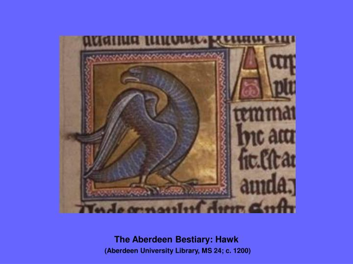 The Aberdeen Bestiary: Hawk