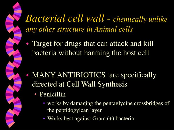 Bacterial cell wall -