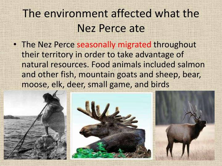 The environment affected what the Nez Perce ate