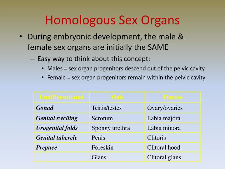 Homologous Sex Organs