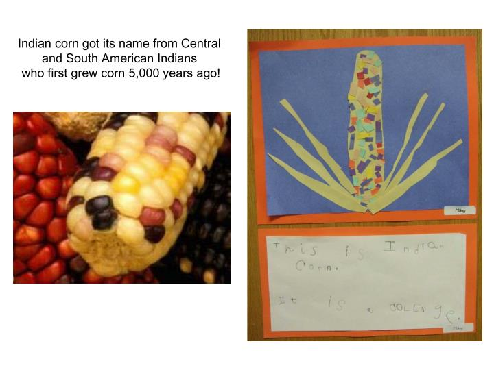 Indian corn got its name from Central and South American Indians