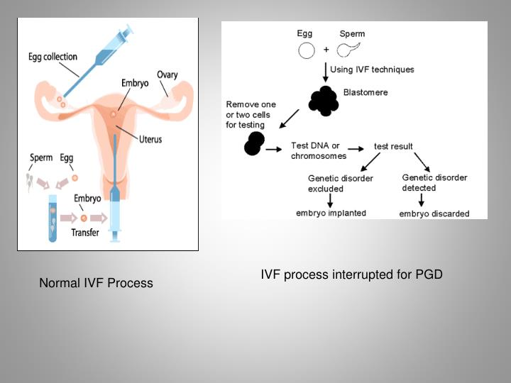 IVF process interrupted for PGD