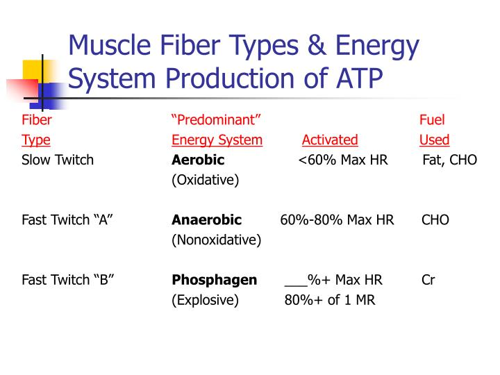 Muscle fiber types energy system production of atp