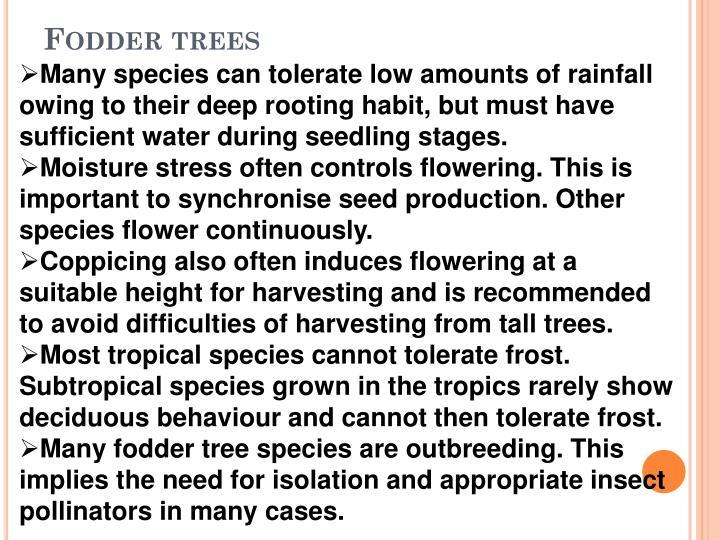 Fodder trees