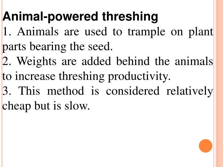 Animal-powered threshing