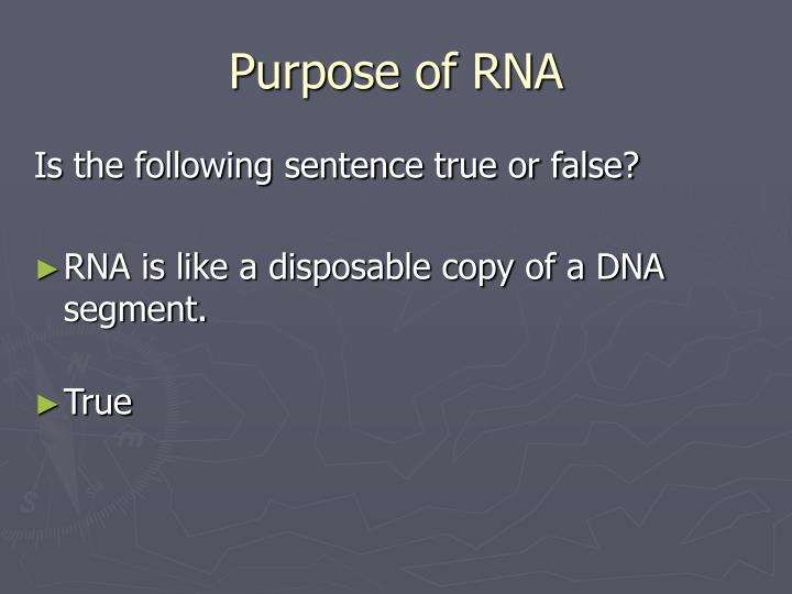 Purpose of RNA
