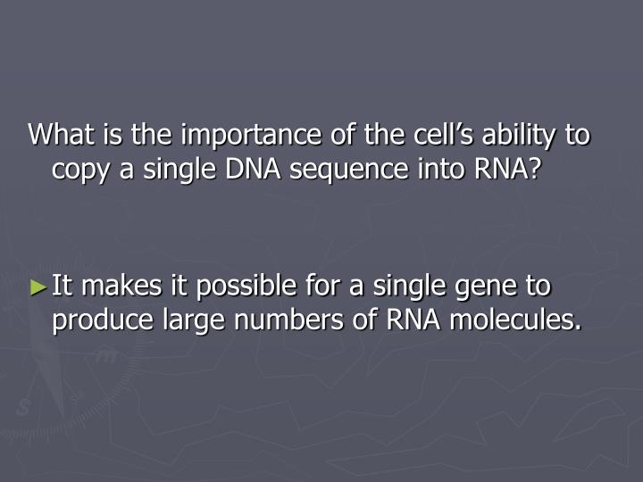 What is the importance of the cell's ability to copy a single DNA sequence into RNA?