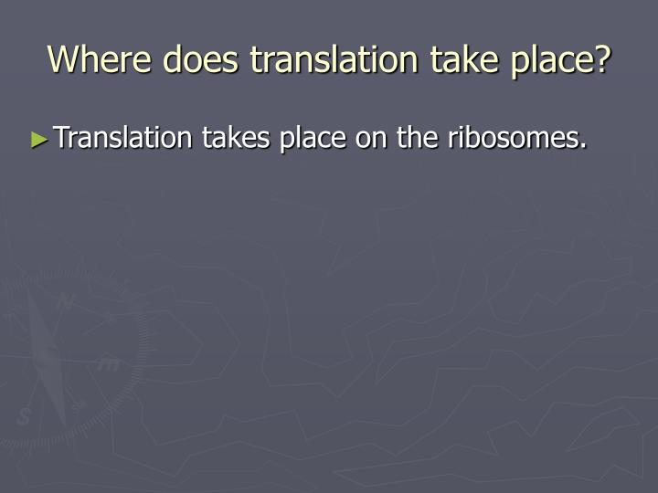 Where does translation take place?