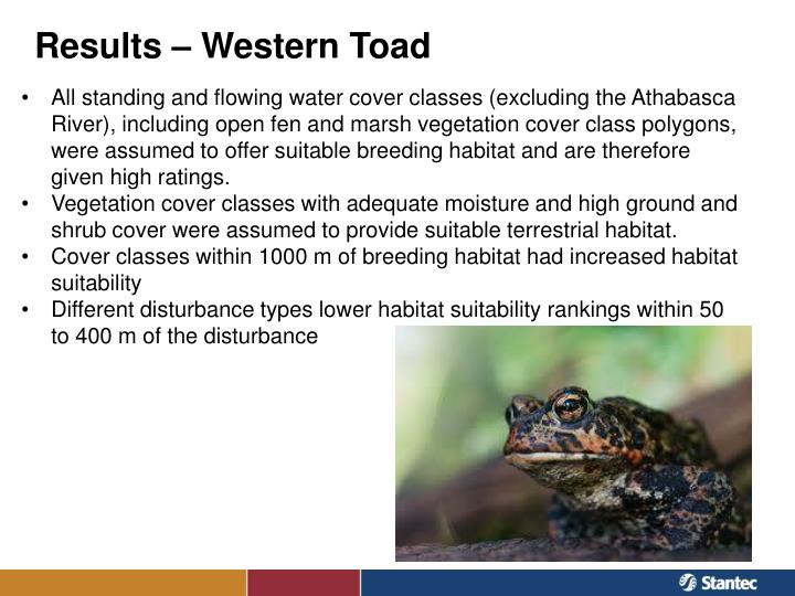 Results – Western Toad