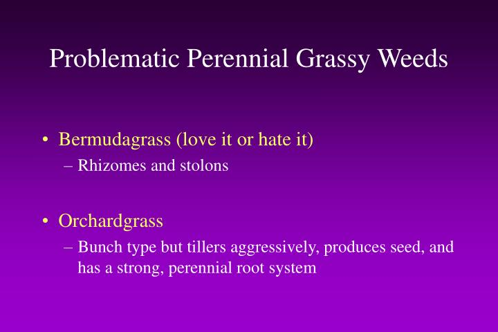 Problematic Perennial Grassy Weeds