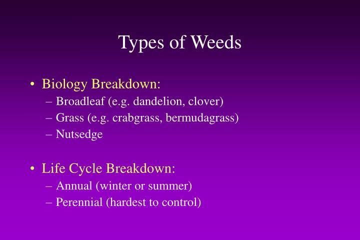 Types of Weeds