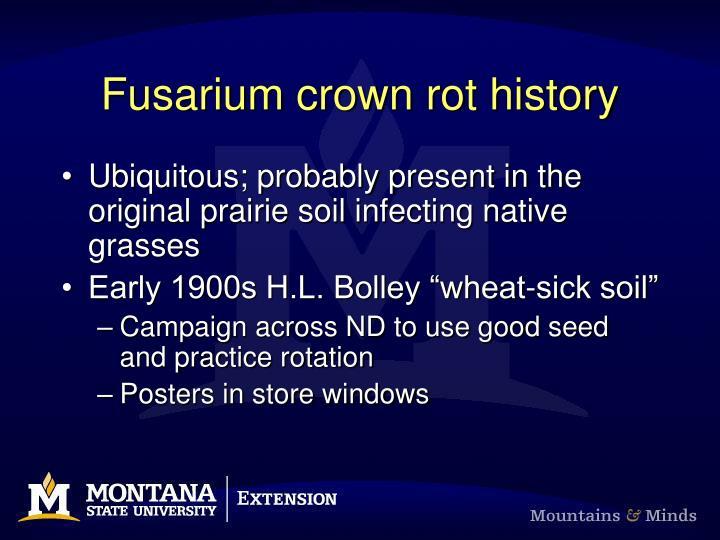 Fusarium crown rot history