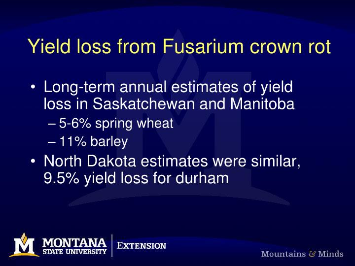 Yield loss from Fusarium crown rot