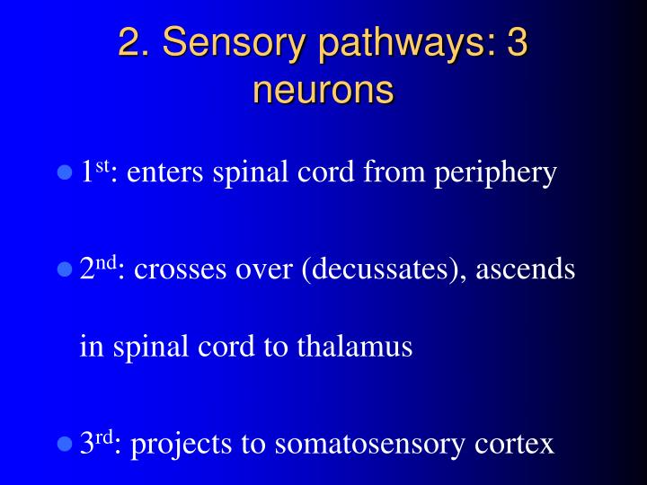 2. Sensory pathways: 3 neurons