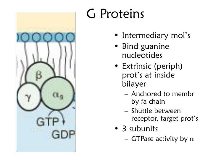 G Proteins