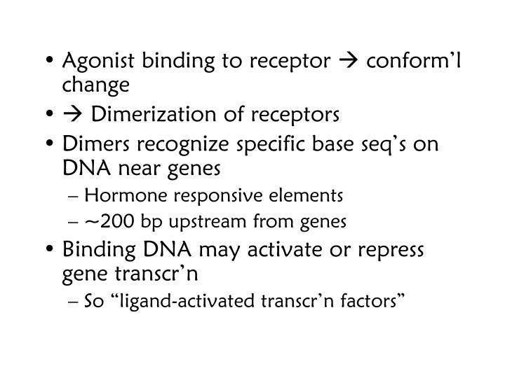 Agonist binding to receptor
